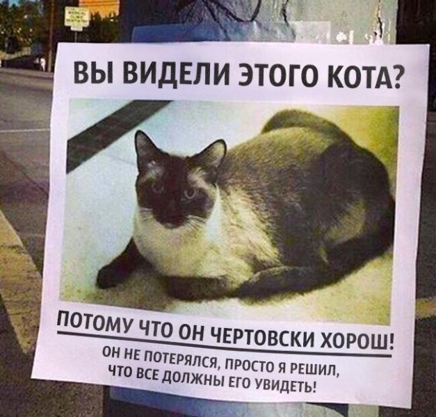 Прикрепленное изображение: кот.jpg