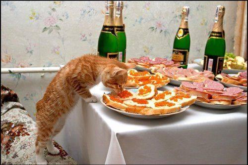 Прикрепленное изображение: Всемирный день кошек.jpg