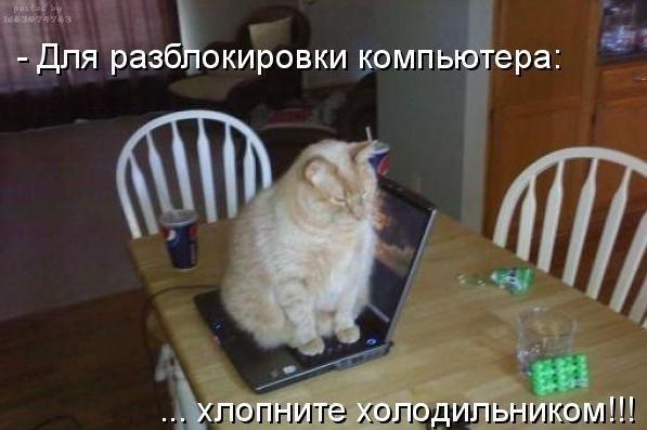 Прикрепленное изображение: cat.jpg