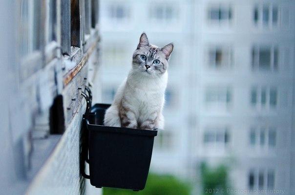 Прикрепленное изображение: кошка на высоте.jpg