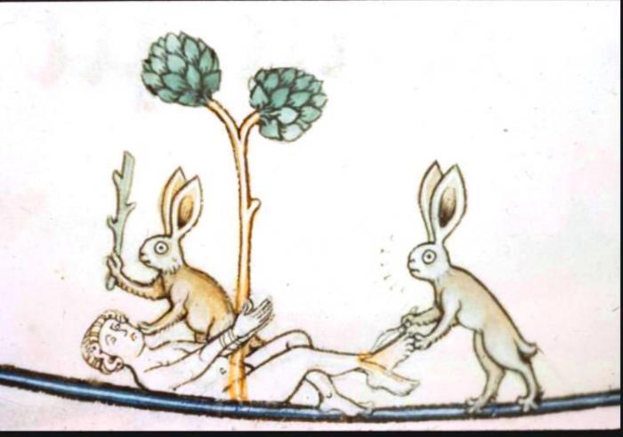 Прикрепленное изображение: зайцы.jpg